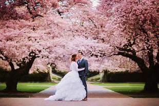 the-cherry-blossom-wedding-theme-%e3%82%b3%e3%83%94%e3%83%bc